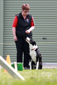 Qualified judges officiate at NZKC Rally-O events. Image supplied by A Dozen Dogs
